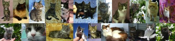 Kitten re-homing available at Mount Barker Veterinary Hospital